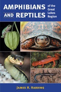 Book cover for 'Amphibians and Reptiles of the Great Lakes Region'